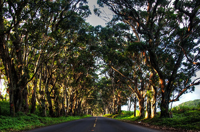 The Tunnel of Trees Kauai!