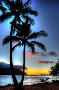 Palm trees with Hanalei Bay Sunset