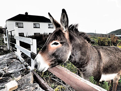Great story about this donkey!