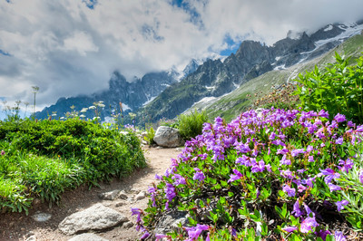 Cool Purple Flowers on Mont Blanc Italy