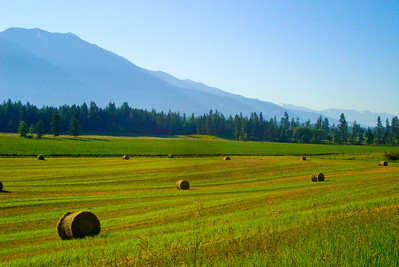 Fields in Montana
