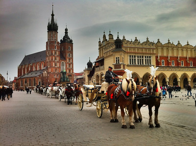 Carriage Horses in the Square Krakow, Poland