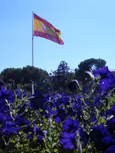 Bandera de Espana with royal blue petunias!