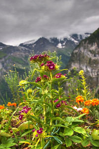 Flowers in Gimmelwald Switzerland :)