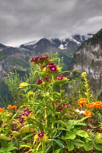 Flowers in Gimmelwald Switzerland :)
