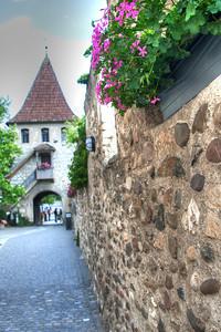Nice Geraniums at Rhine Falls Switzerland