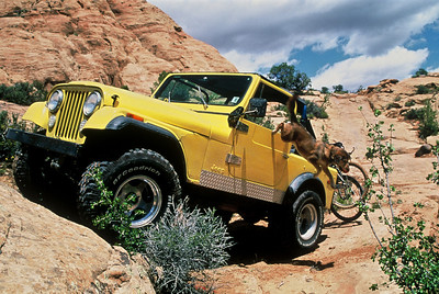 Cooper jumping out of our 1977 CJ7 Jeep in Moab, UT