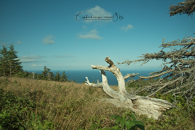 Skyline trail at Cape Breton