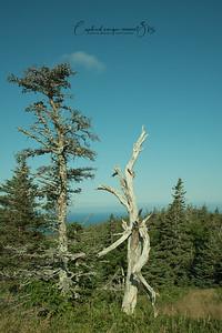 Skyline trail at Cape Breton