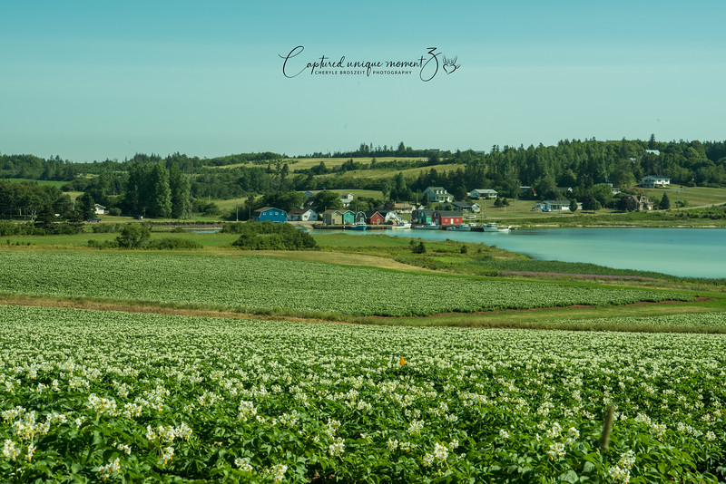 Near Green Gables, PEI