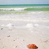 Shells & Sponge washed up on Honeymoon Island