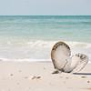 Even the shells display 'Love' on Honeymoon Island!