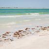 Birds At Play On Honeymoon Island