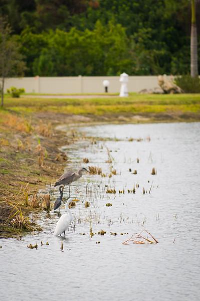 Birds At Myakka River Motorcoach Resort