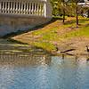 Lake Wildlife At Myakka River Motorcoach Resort