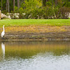 Bird Chatter ~ Myakka River Motorcoach Resort
