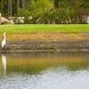 Bird Chatter ~ Myakka River Motorcoach Resort