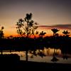 Silhouette Sunset ~ Myakka River Motorcoach Resort
