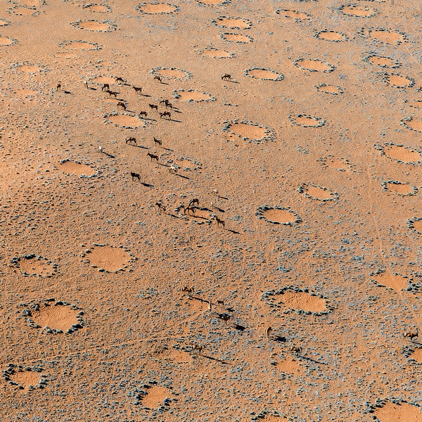 Fairy Circles - Wolwedans