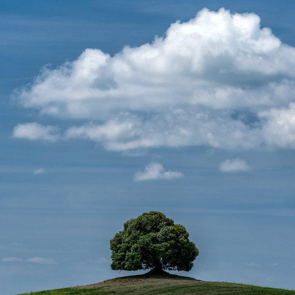 Lone Tree - near Buenconvento