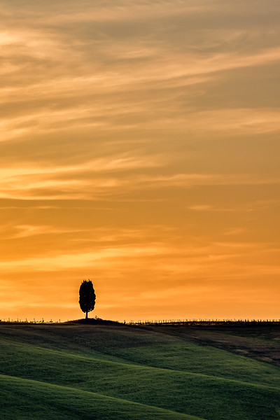 Lone Tree - Val D'Orcia