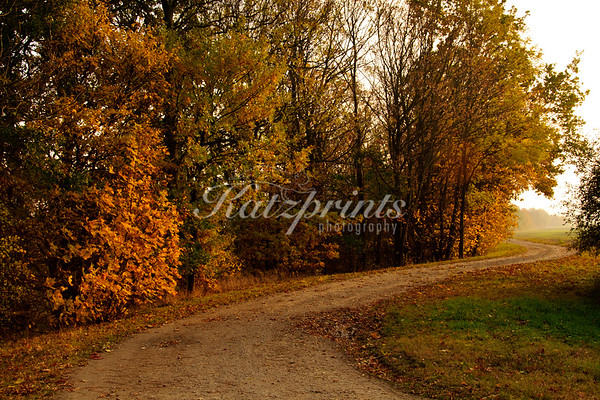 Colorful trees line a small road which winds through fields in Germany.