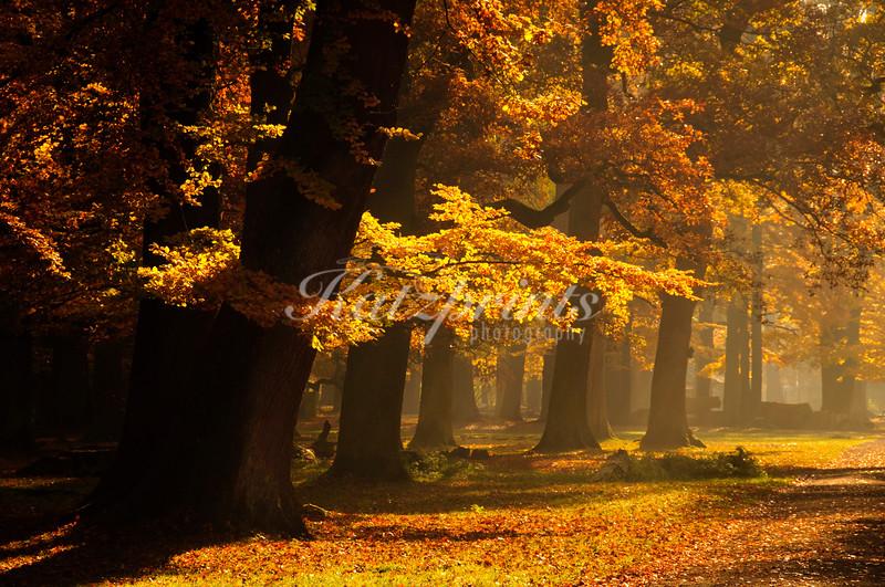 German Autumn Glory