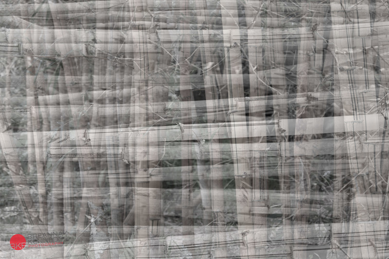 A composite of bamboo found at Stone Dam