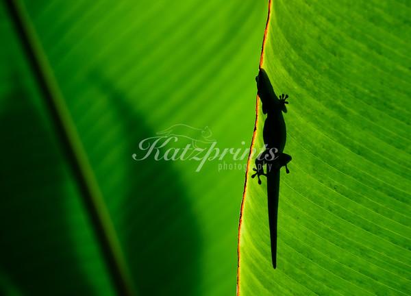 Gecko on green