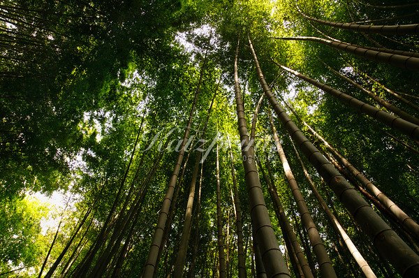 A bamboo forest surrounds the Chokoku-ji temple in Ajiro