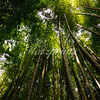 A bamboo forest surrounds the Chokoku-ji temple in Ajiro