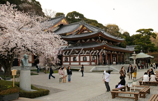 Hase-dera (known formally as Kaikōzan Jishōin Hase-dera) is one of the great Buddhist temples in the city of Kamakura and is famous for housing a massive wooden statue of Kannon.