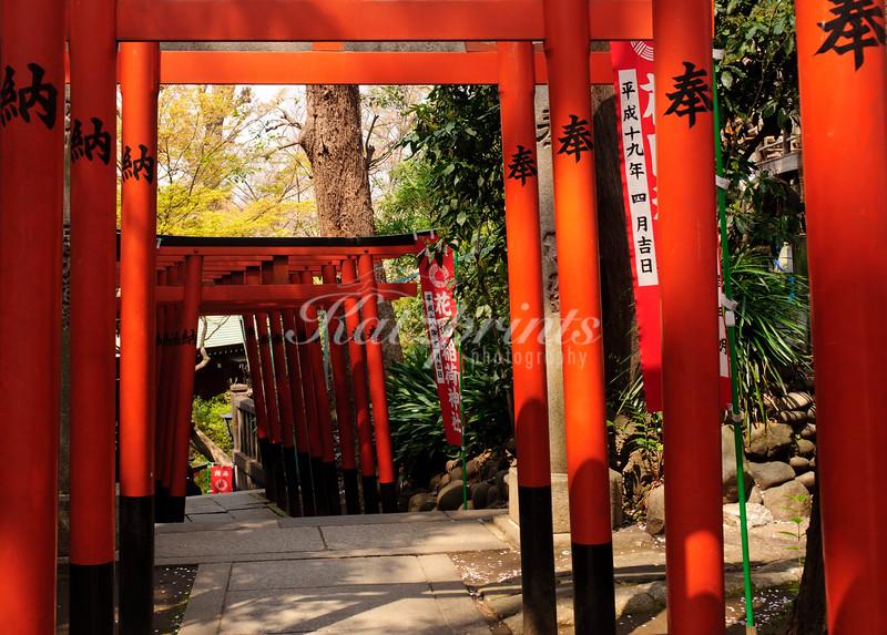 Red torii gates lead to the Gojo shrine in Tokyo
