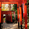 Red torii gates lead to the Gojo shrine in Tokyo