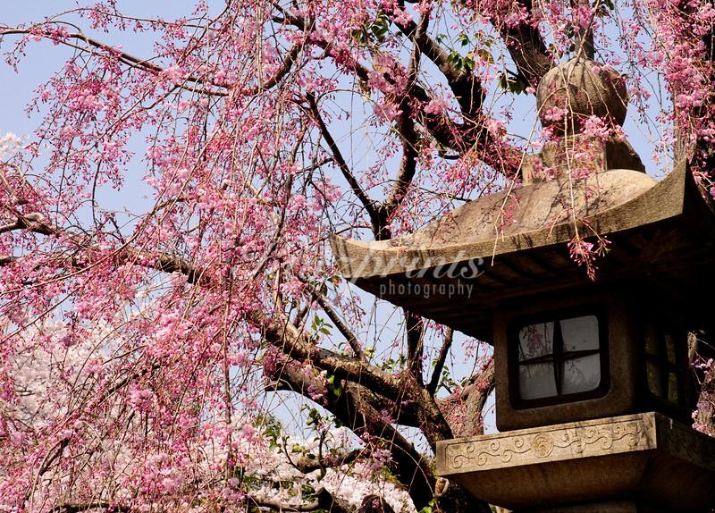 Stone lantern at the Gojo shrine in Tokyo