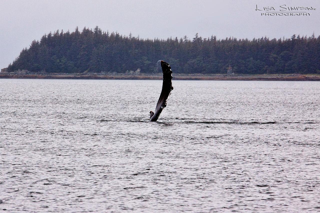 Juneau Layover 2015