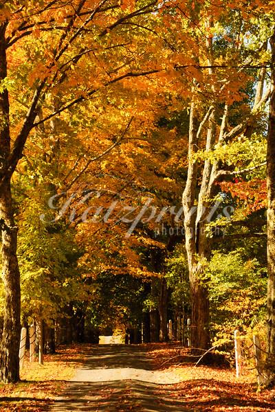 Autumn scene in Maine