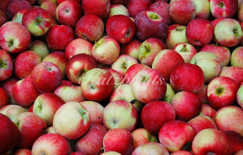 Rain on apple display at New England Farmer's market