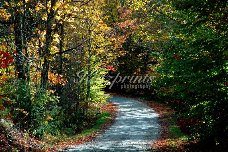 Forest road in Vermont