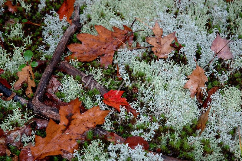 Forest floor still