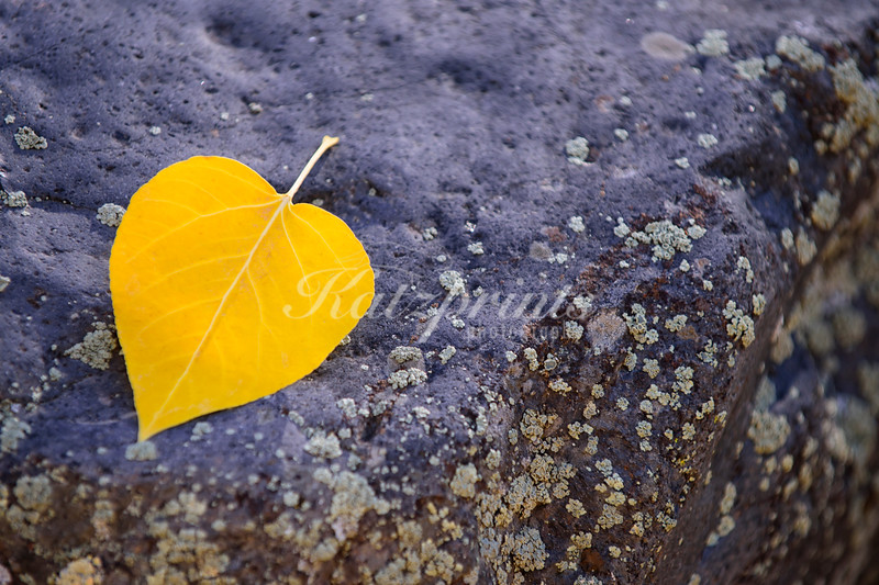 Leaf on rock