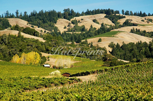 Vineyards are creeping up typical California hills.