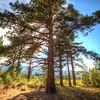 Tahoe Elder