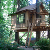 Nelson construction<br /> Same idea as my design with main beams stretching between both trees<br /> No knee braces<br /> Ladder entry<br /> A frame roof