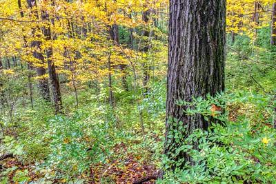 Autumnal Treescape