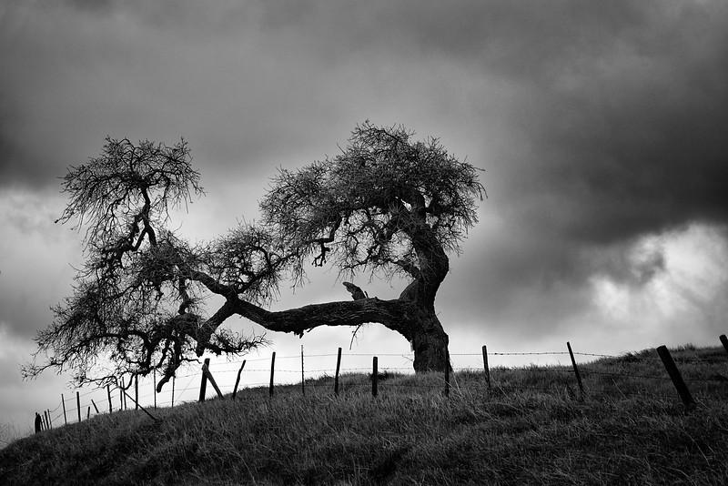 The Balancing Tree