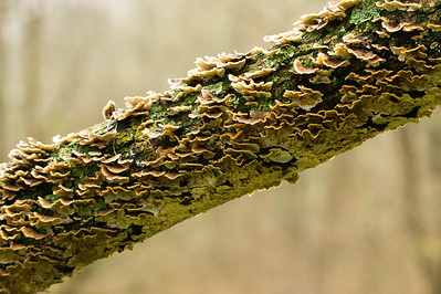 Lichen Detail on Crooked Tree