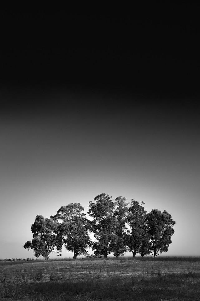 A Tree Septet