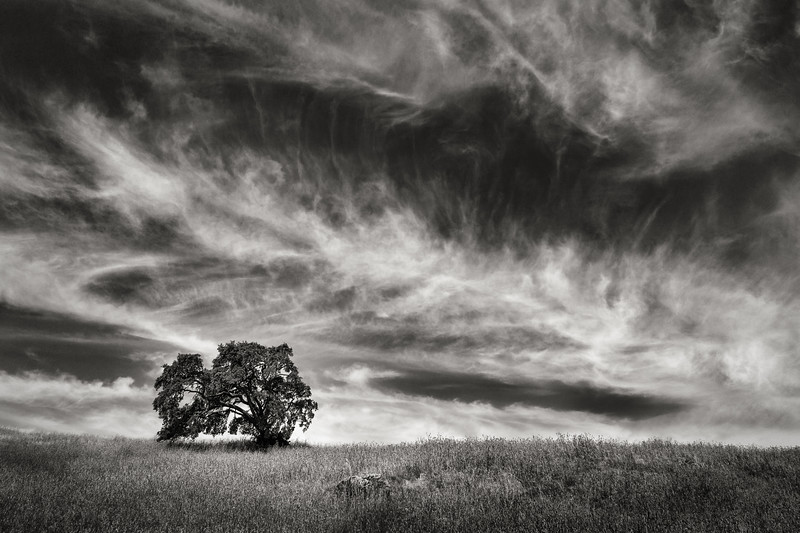 Oaktree beneath Cirrus Clouds