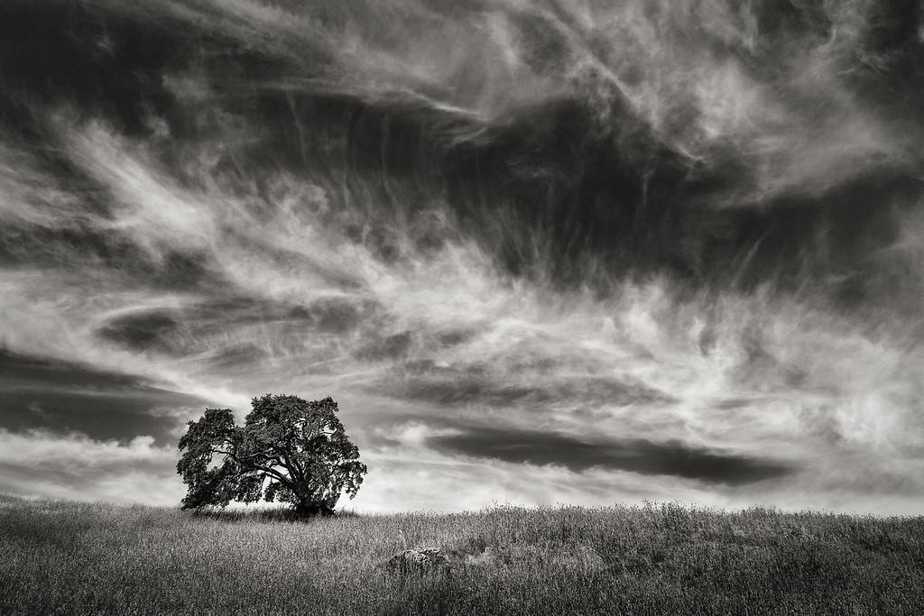 Oaktree beneath Cirrus Clouds